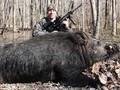 Vurduğu 226 kiloluk domuzla rekor kırdı