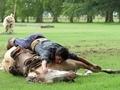Atlara fısıldayan adam