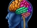 İnsan beyninin en iyi çalıştığı yaş