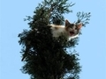 Tuhaf kedi kurtarma operasyonu