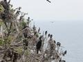 Türkiye'de bir ada tamamen kuşlara bırakıldı