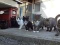 Bu adaları kediler yönetiyor